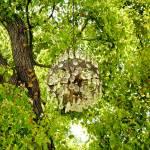 """Chandelier Tree Study 1"" by robertmeyerslussier"
