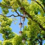 """Chandelier Tree Study 2"" by robertmeyerslussier"