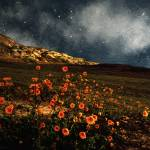 """Nightlife in Death Valley"" by RCdeWinter"
