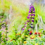 """Spring Garden #8"" by johncorney"