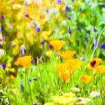 """Spring Garden #7"" by johncorney"