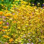 """Spring Garden #5"" by johncorney"