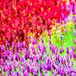 """Spring Garden #4"" by johncorney"