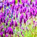 """Spring Garden #2"" by johncorney"