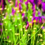 """Spring Garden #1"" by johncorney"