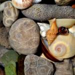 """Petoskey Stones ll"" by Michelle1991"