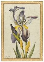 A purple iris, signed by Muhammad Baqir, Persia, A