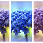 """""""Allium Triptych"""" by JessicaJenney"""