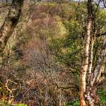 """Calderwood View"" by TomGomez"