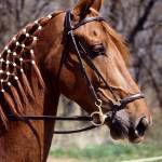 """Horse with Braided Mane"" by kphotos"