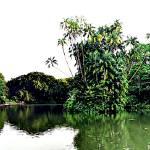 """Panorama Botanic Garden Singapore"" by sghomedeco"