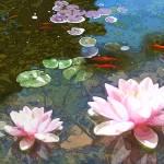 """""""koi-pond-4-20-JPG"""" by artistfaye"""