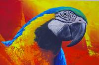 Colorful parrot of the Amazon