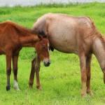 """""""Horses on a Farm"""" by rhamm"""