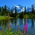 """Wildflowers Of Mount Shuksan - Picture Lake"" by artsandi"