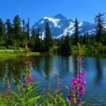 """Wildflowers Of Mount Shuksan - Picture Lake"" by artsandi"