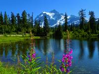 Wildflowers Of Mount Shuksan - Picture Lake