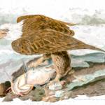 """Audubon White-Headed Eagle Reimagined"" by johncorney"