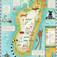 Illustrated Map of Madagascar by Nate Padavick Art Prints & Posters by They Draw & Cook & Travel