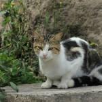 """Cat"" by rhamm"