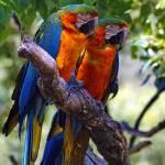 """Pair of Parrots"" by Wintercreeks"