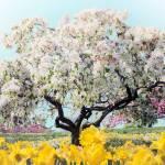 """""""Pastel Park"""" by JessicaJenney"""