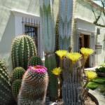 """Old Town Scottsdale Color"" by GordonBeck"