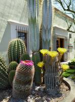 Old Town Scottsdale Color