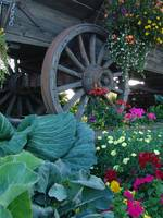 Pioneer Wagon Flower Bed