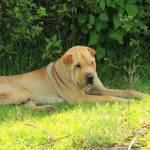 """""""Dog Next to a Bush"""" by rhamm"""
