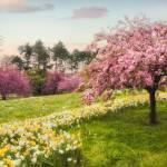 """Daffodil Heaven"" by JessicaJenney"