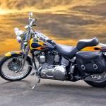 """Harley Davidson Softail"" by FatKatPhotography"