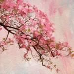 """Dogwood Blossom"" by JessicaJenney"
