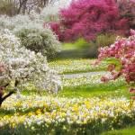 """""""Dvine Daffodils"""" by JessicaJenney"""