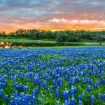 """Bluebonnet Sunset at the Park"" by beecreekphotography"