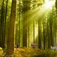 Early morning forest with Deer Art Prints & Posters by Brian Kelly
