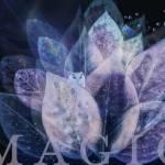"""""""Magic"""" by dawnleblanc"""