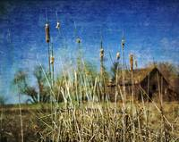cat tails and old building