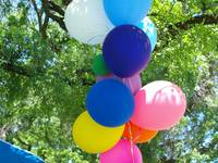 Balloons Under Green Canopy
