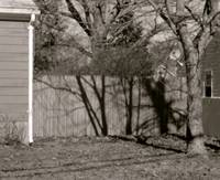 stockade fence and trees photography painting