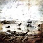 """""""Beach Birds"""" by jduffey"""