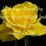 """Rose of Love"" by GlennFrancoSimmons"