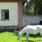 """""""Horses Next to a House"""" by rhamm"""