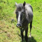 """Gray Horse"" by rhamm"