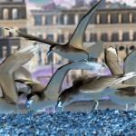 """Herring Gulls inverted"" by DavidFowler"
