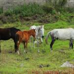 """""""Horses in a Pasture"""" by rhamm"""