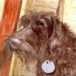 """Chocolate Labradoodle Jackson"" by mozache"