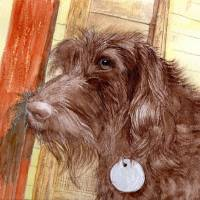 Chocolate Labradoodle Jackson Art Prints & Posters by Yvonne Carter