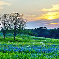 Sun Setting on Another Texas Day Art Prints & Posters by Katya Horner