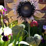 """""""Sunflower"""" by SaraJunebug"""